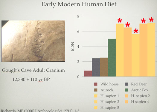 Early Modern Human Diet by Michael P. Richards