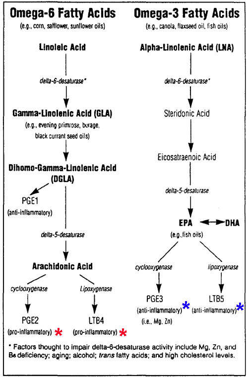 Omega-6 vs Omega-3 Fatty Acid Metabolism
