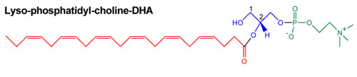 dha in lysophosphatidyl choline