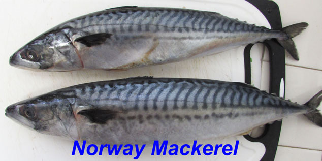 mackerel-norway-with-label