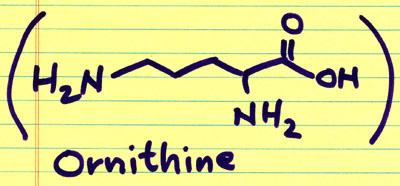 ornithine