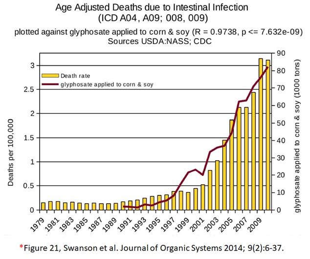 glyphosate toxicity - deaths due to intestinal infection
