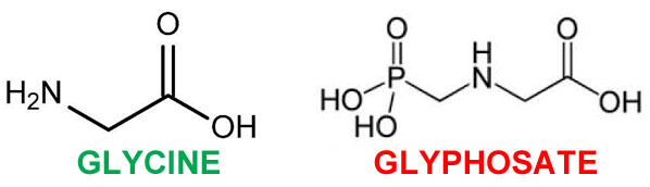glycine and glyphosate toxicity