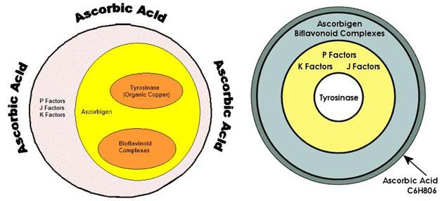 vitamin c complex combinations