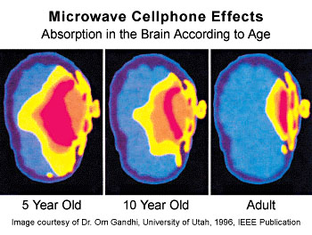 microwave cell phone effects